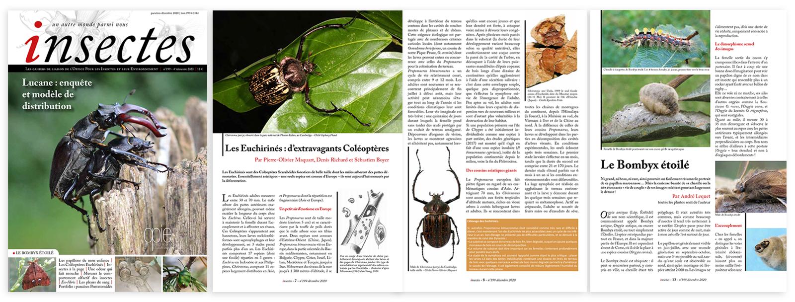 Nouveau format revue Insectes